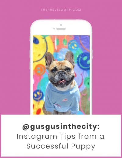 Instagram Tips for Dog Accounts from the Famous @gusgusinthecity (Behind the Feed)